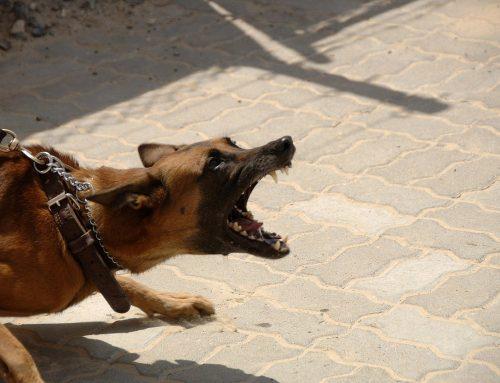 Šéf povedal: Som psychopat, kľudne vypustím psy.